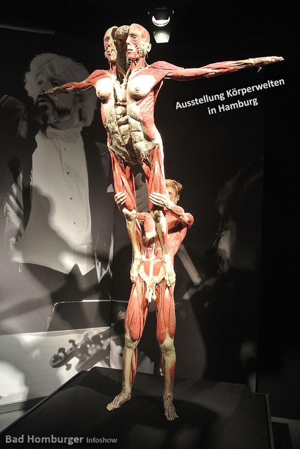 Ausstellung KÖRPERWELTEN – Eine Herzenssache verblüfft jeden Besucher