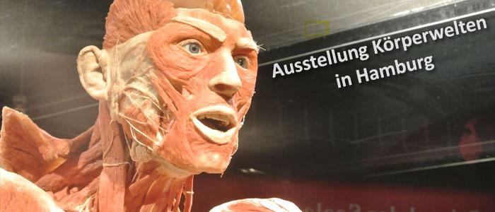 Ausstellung Körperwelten in Hamburg